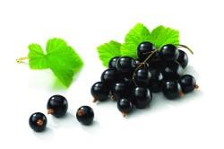 Витамин С из черной смородины